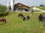 staufenhof14