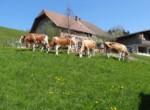 BauernhofRoethlisberger20