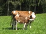 Biohof im Graben_6